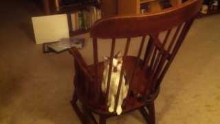 Silly Cat  Playing On My Rocking Chair