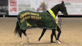 УКРОЩЕНИЕ строптивого ЧЕМПИОНА )) Ринг АХАЛТЕКИНСКИЕ чистокровные #лошади. Выставка #ИППОсфера 2019
