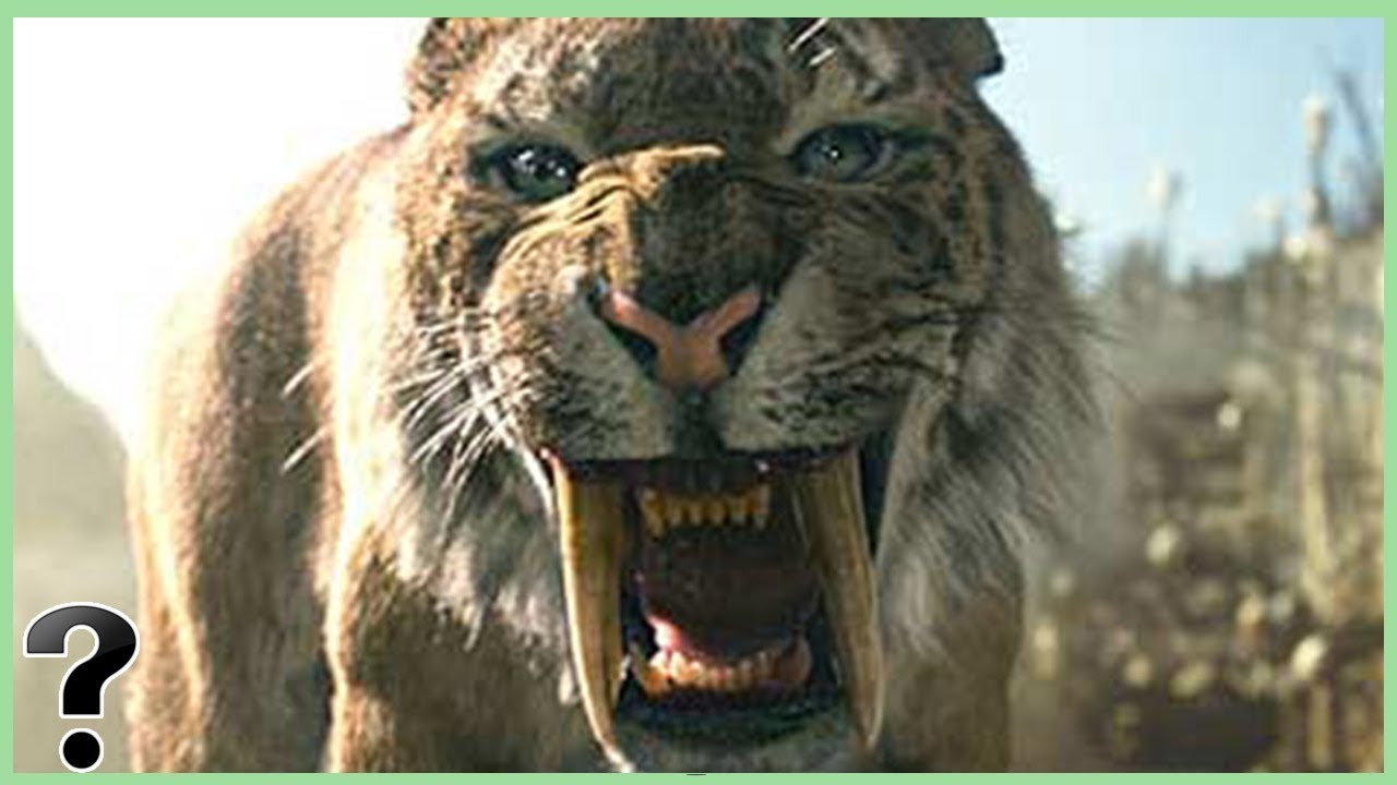 Saber-toothed cat - Wikipedia