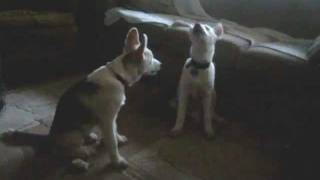 Wrigley and Quincy Sing