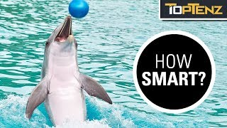 10 Mind Blowing Facts About Dolphin Intelligence