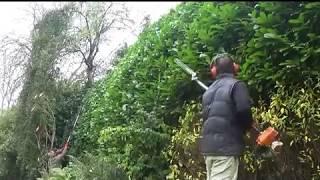 Trimming some huge Laurel hedges with dad.