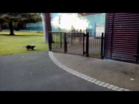 Funniest Dog vs squirrel  amazing chase 4