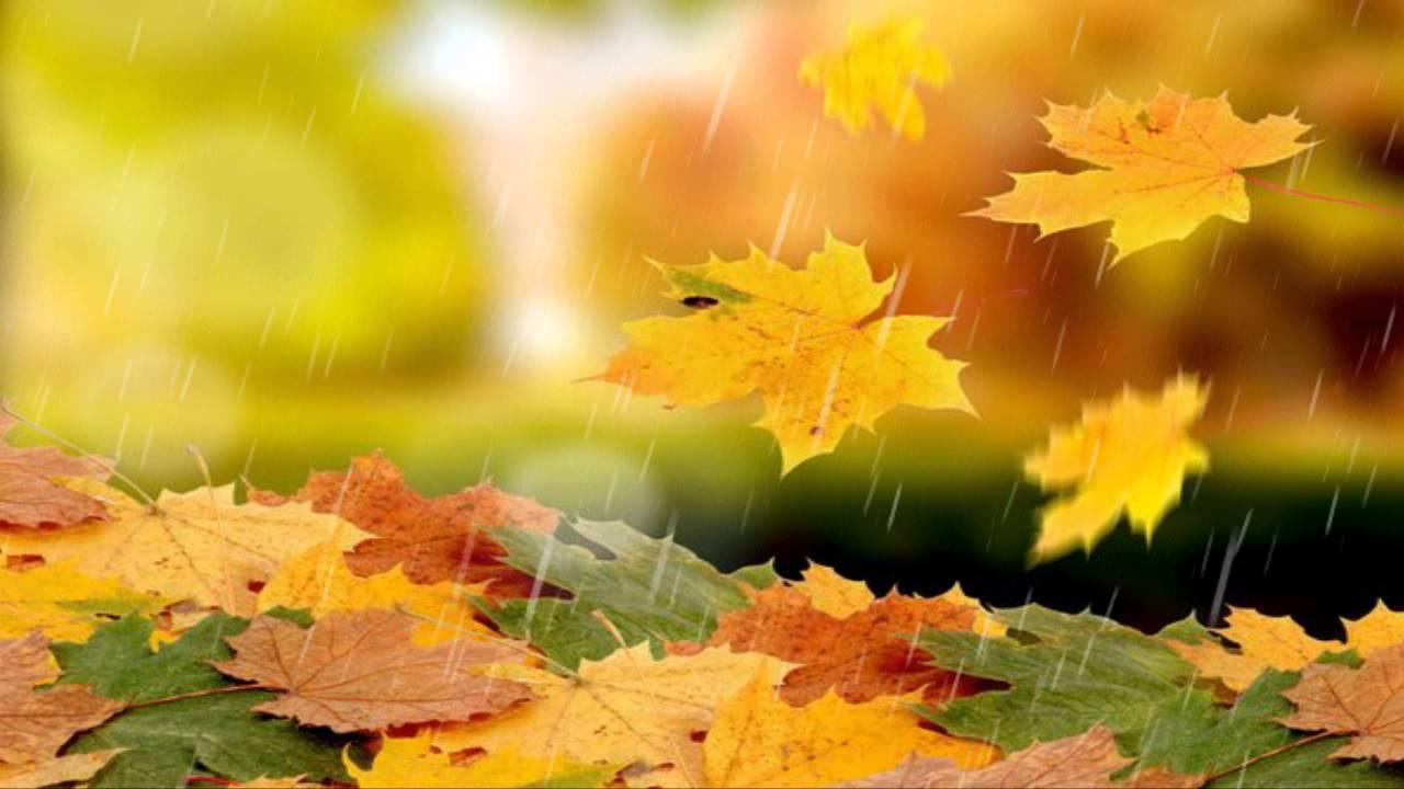 Футаж Осенний дождь - YouTube