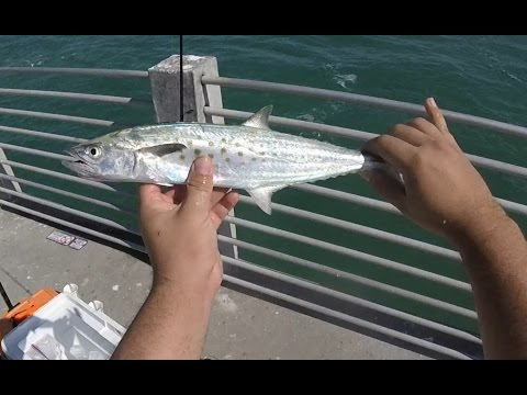 Fort desoto pier fishing spanish mackerel youtube for Fort desoto fishing pier