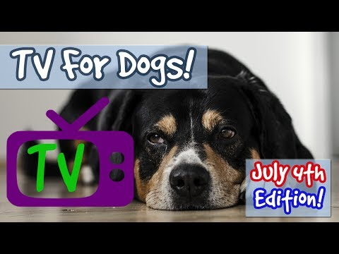 TV FOR DOGS JULY 4TH PLAYLIST! TV Combined with Soothing Music for Dogs Scared of Fireworks! 🐶🎆