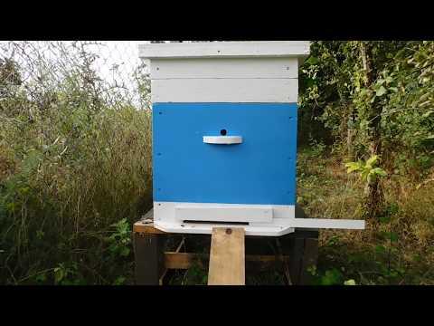 Пчелы не могут взлететь, пчёлы заболели, Акарапидоз, и как это излечить