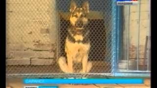 Самая красивая и умная собака России живет в Мордовии!