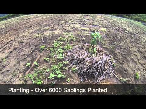 Simply Natural Investments - El Olivo, Mango Plantation - Update Nov 2014
