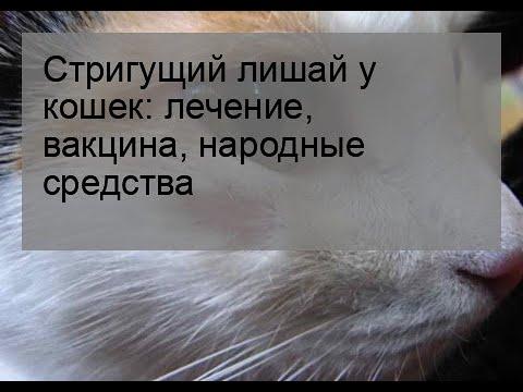 Лечение стригущего лишая у кошек в домашних условиях