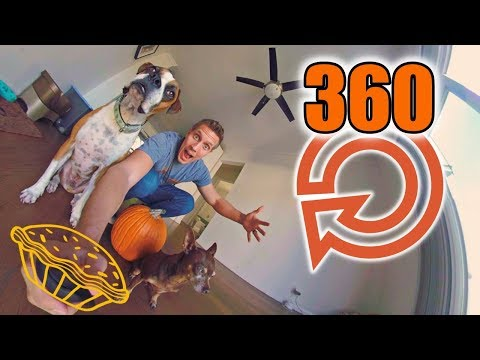 DOGS EATING THANKSGIVING DINNER 360 (GoPro Fusion) Hard To Stop Watching