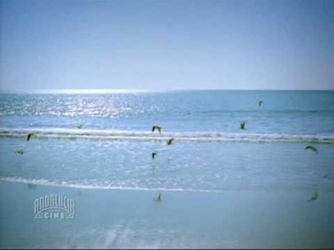 Cantores de Hispalis - Por la bahía