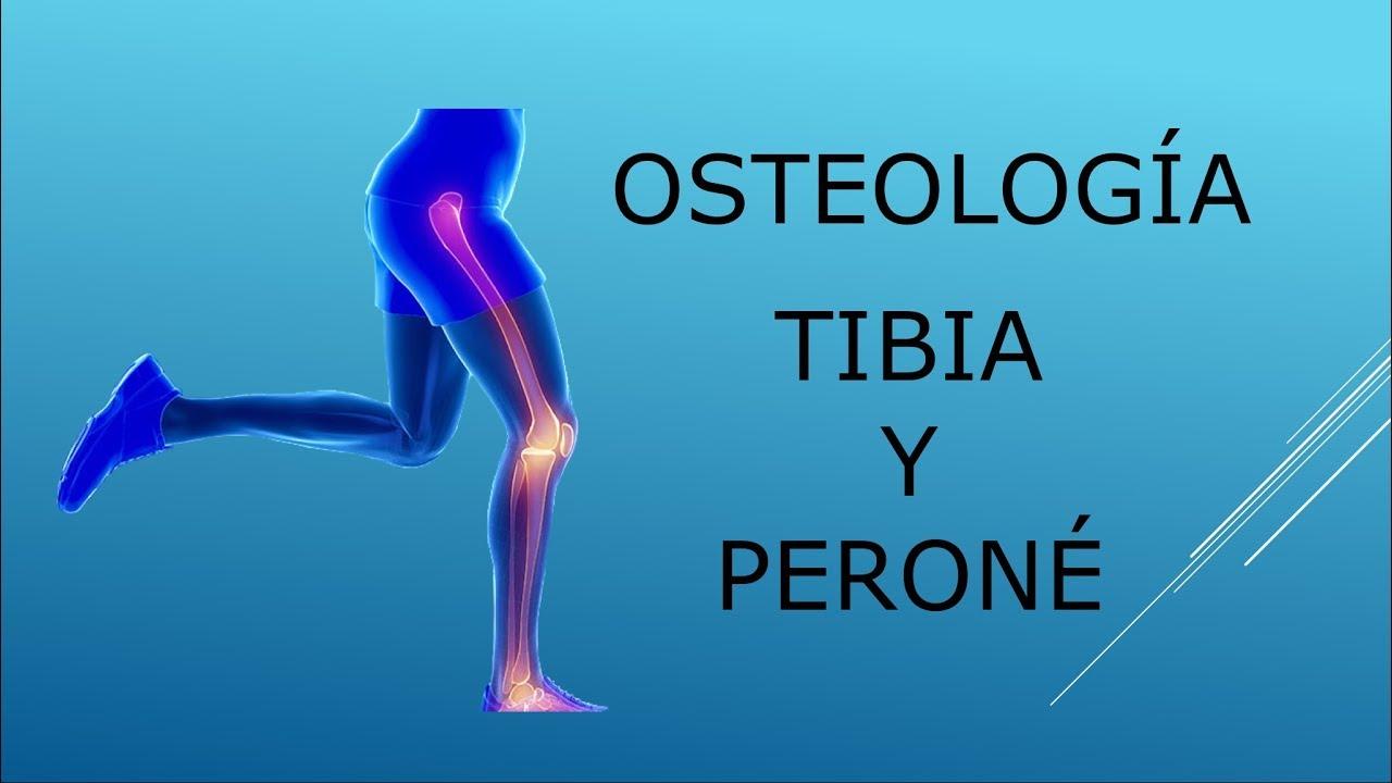 Osteología. Tibia y peroné - YouTube
