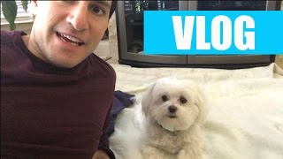Say Hello to Muffy the Dog! | VLOG