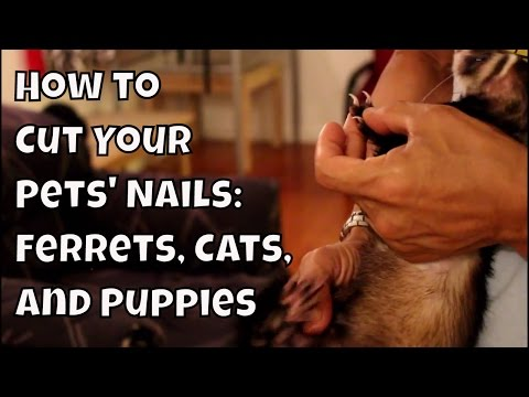 How to Cut Your Pets' Nails: Ferrets, Cats, & Puppies - How Tos VOL. 2