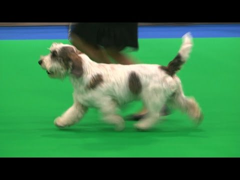City of Birmingham Dog Show 2016 - Hound group FULL