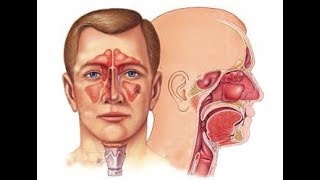 Dr Priyanjana Sharma - ENT Specialist in India for Best Results in Sinus, Ear and Throat Surgery