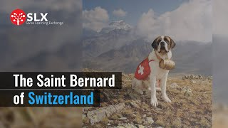 Swiss St Bernard Dog Breed | Online learning | SLX