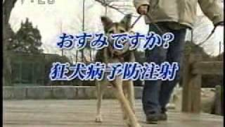 MoMo CM 出演2005 三重県獣医師会