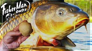 Супер Насадка для рыбалки на Карпа Сазана Рыба Клюет на каждом Забросе