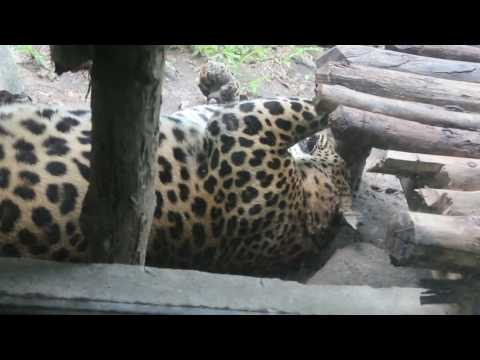 Naypyitaw Zoological Garden and Safari Park, June 2014  Pt 2