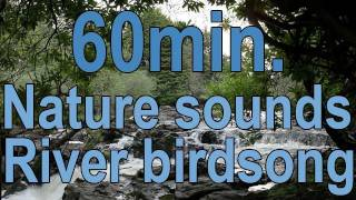 #5..1 Hour Relaxation-Sleep-Study-Bird Song-Waterfall-1 Stunde entspannen-Vogelgesang-Wasserfall