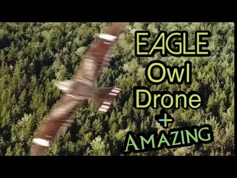The real kings of flight , Mavic pro drone encounters a Eagle and Owl playing in the sky