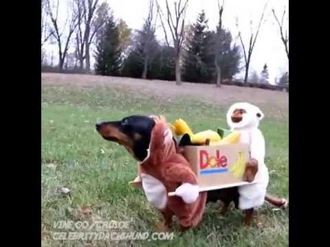 Two Monkeys Carrying A Box Of Bananas Dog Costume Vine