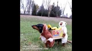 Two Monkeys Carrying A Box Of Bananas - Dog Costume Vine By Crusoe