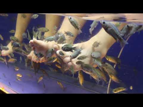 Fish Spa Therapy (Fish Spa Feet)