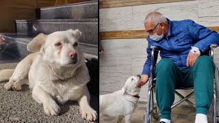 Faithful Dog Waits Outside Hospital for Owner