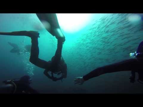 Shark Dive at Magic Point