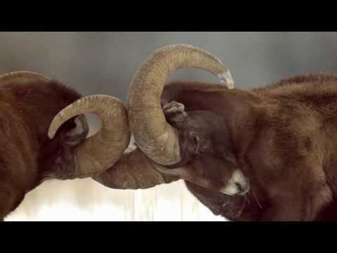 Yellowstone Live Season 2 Trailer