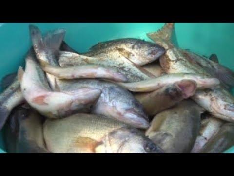 울산시, 배스.황소개구리 등 생태교란종 수매