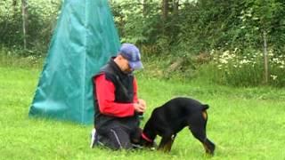Doberman Zeus Von Neusaddrache, 5 Months Old - Obedience Training