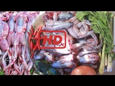 Tolle!! Wie Man Frosch Mit Zwiebel In Kambodscha Kocht - Land Essen