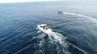 Amazing Wild Dolphins filmed using Drone! - DJI Phantom 4 Pro