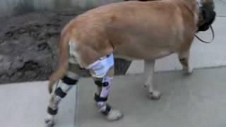 how to put on a knee brace youtube