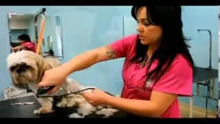 American Grooming Academy   Pet Grooming School & Salon In Temecula