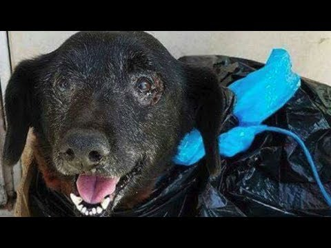 This Sweet Old Dog Was Bleeding Heavily – So She Was Put In A Trash Bag And Dumped At A Shelter