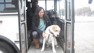 Service Dog Riding The Bus!