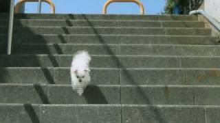 賢いわんこ 名犬迷犬 ヘビメタ.