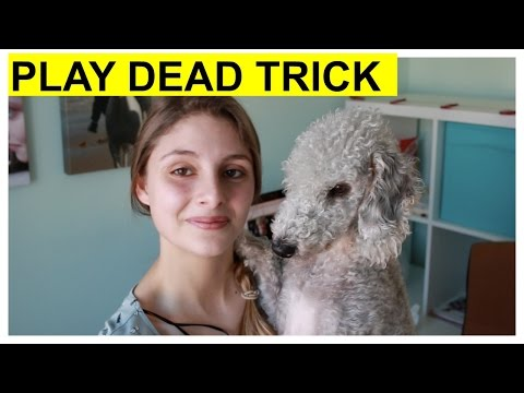 How To Teach Your Dog To Play Dead Without A Clicker