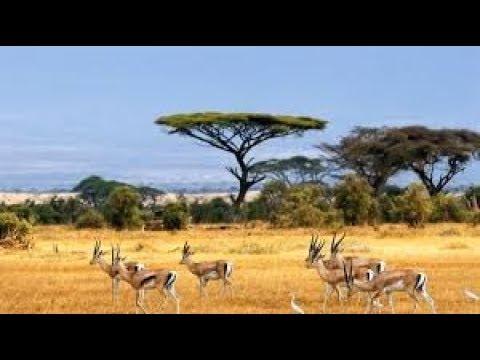Download UF 100 - Value of Wildlife