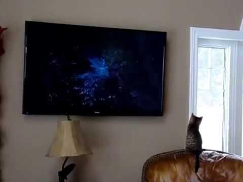 Kitten watches Jungle Book