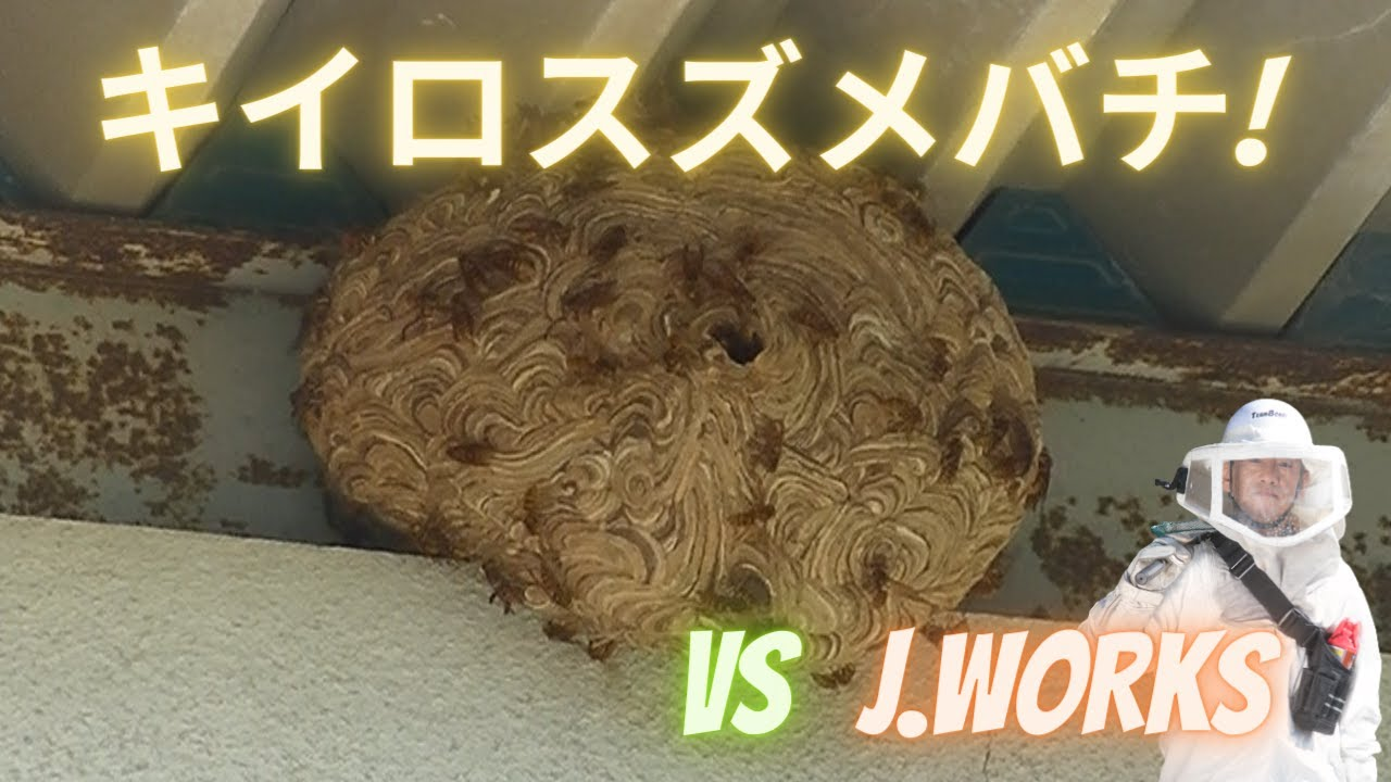 【最新作】キイロスズメバチ VS 滋賀のハチ駆除「ジェイ・ワークス」  連続テレビ小説「スカーレット」で盛り上がっていた甲賀市信楽町にて。