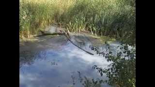 УЖАС!!!канализация стикает в водоём ЦПКиО