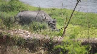Chitwan National Park and Pokhara