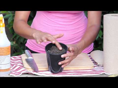 How to Plant an Avocado Seed in Soil : Garden Seed Starting