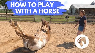 HOW TO PLAY WITH A HORSE